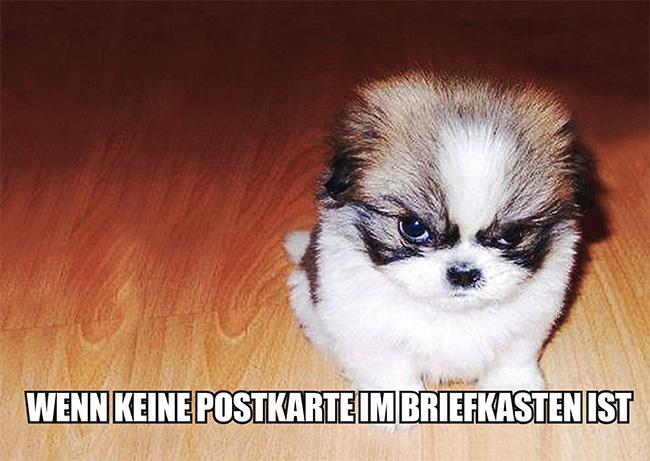 4051-Hund-Meme-1