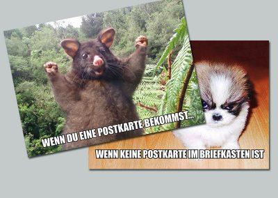 Tiere und weitere Meme Postkarten